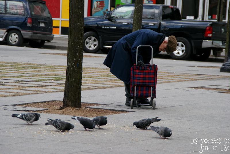 blog voyage canada pvt montreal vieux pigeon