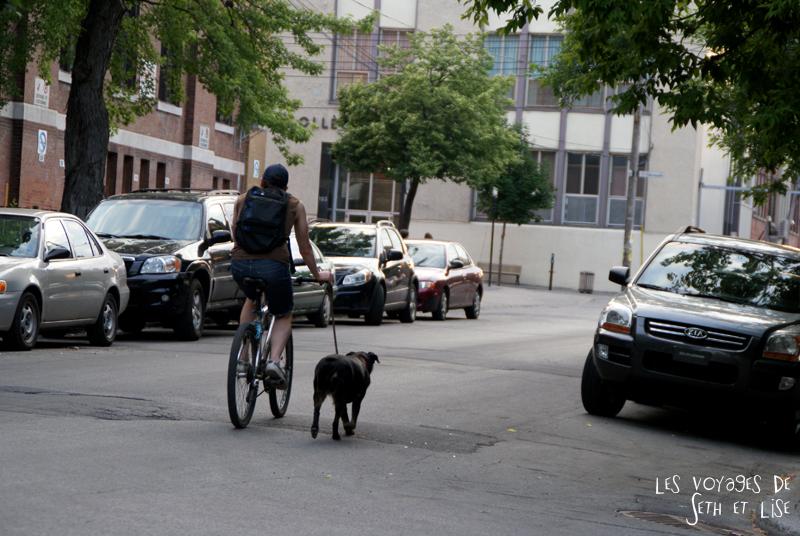 blog voyage pvt canada couple montreal tour du monde rue plateau homme chien promenade velo crotte