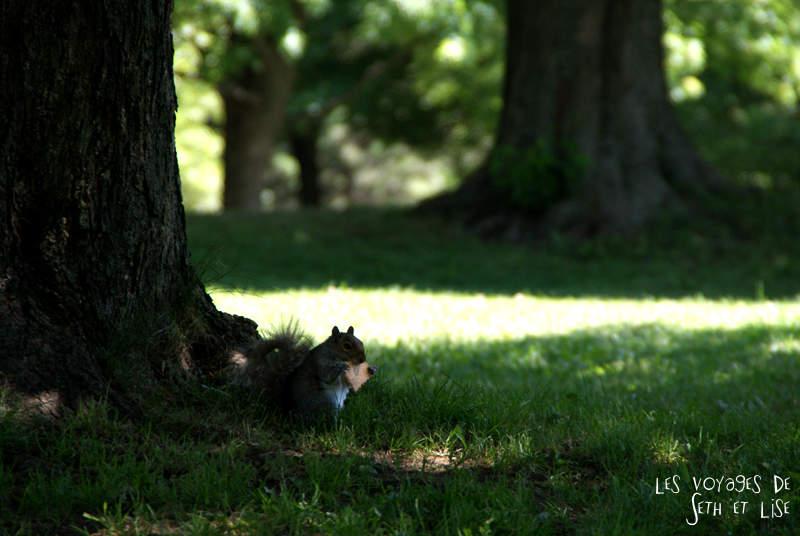 Un pique-nique au lac aux castors