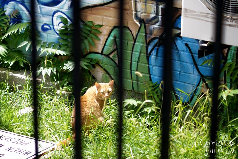 blog pvt canada whv toronto ontartio couple voyage travel tour du monde chat cat cute
