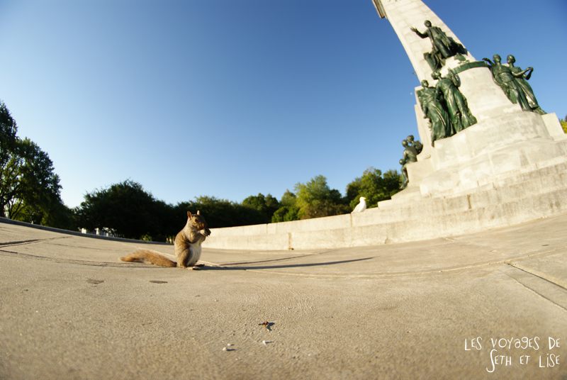 blog canada montreal pvt seth lise photo sunrise urbain soleil crépusucle ecureuil squirrel
