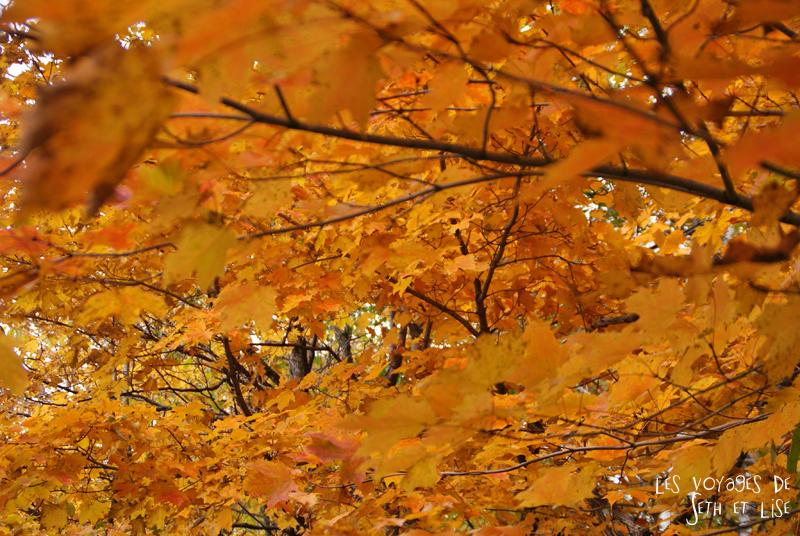 blog photographie canada pvt pvtiste voyage couple tour du monde quebec city ville chutes montmorency parc feuille ete indien erable jaune orange