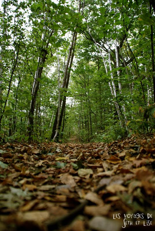 blog pvt canada montreal photographie voyage couple tour du monde quebec foret bouleaux arbre nature