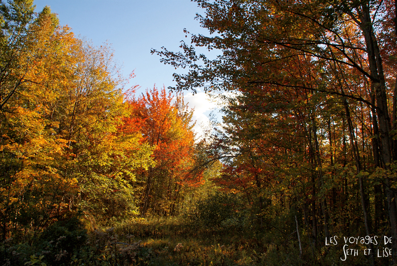 blog pvt canada pvtiste quebec mont orford parc photgraphie voyage couple ete indien summer indian couleur colors nature tour du monde arbres magnifiques