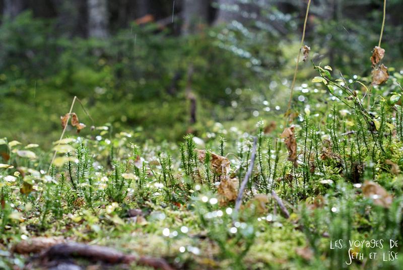 blog pvt photographie pvtiste canada alberta rocheuses rockies moutains voyage montagne couple tour du monde nature parc national lac lake pluie rain