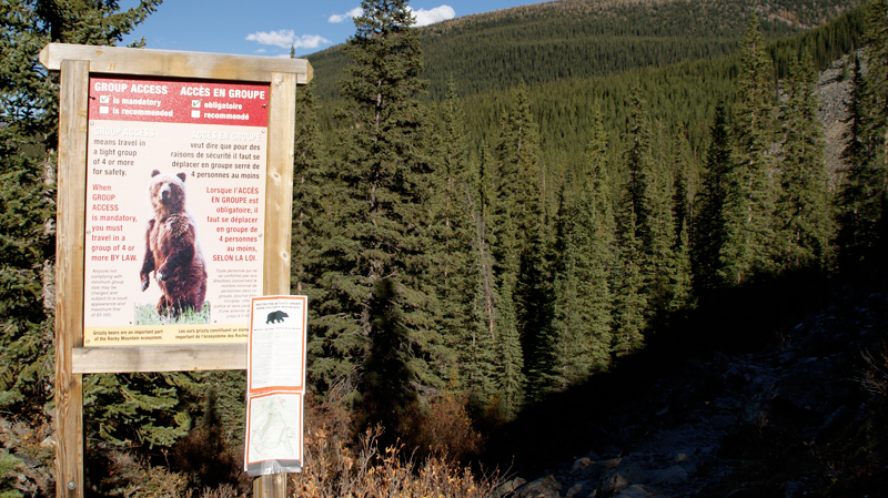 blog photogaphie pvt pvtiste canada alberta rocheuses montagne couple voyage tour du monde paysage nature lac lake moraine bear ours