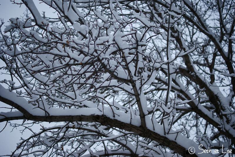 blog canada pvt voyage photo alberta tempete neige hiver branche macro