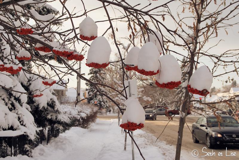 blog voyage canada pvt edmonton neige hiver winter fleur