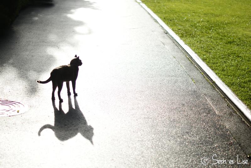 blog whv nouvelle zelande pvt voyage photographie seth lise auckland nord ile chat cat ombre