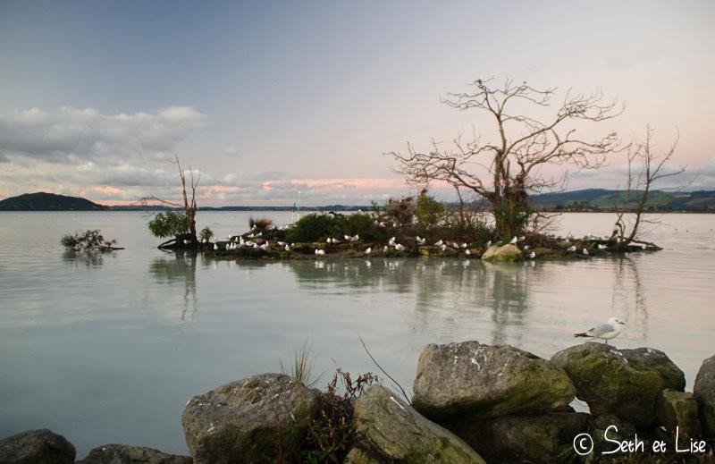 island_birds.jpg