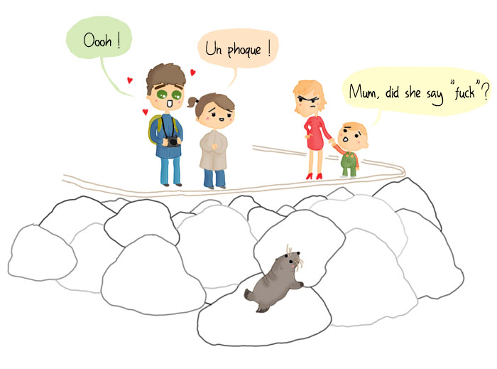 bd humour voyage nouvelle zelande pvt whv wellington phoque animal