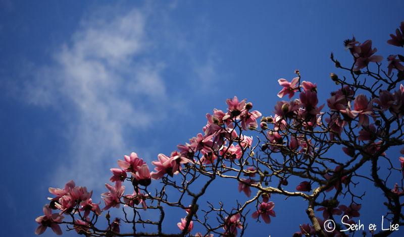 fleur de merde rose