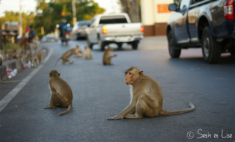 lopburi blog voyage thailande photo monkey