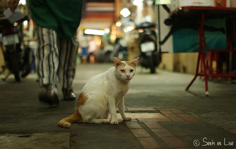 blindcat