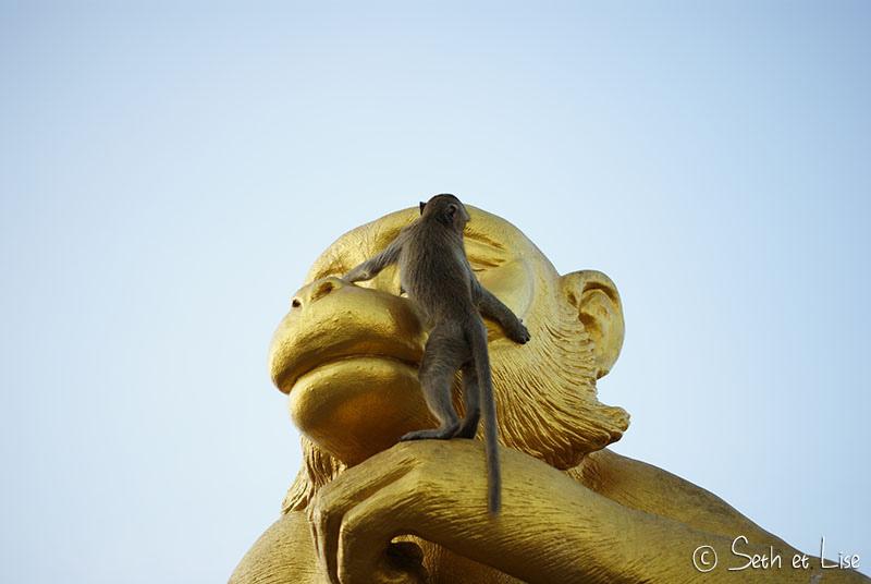 Lopburi, la ville des singes rois