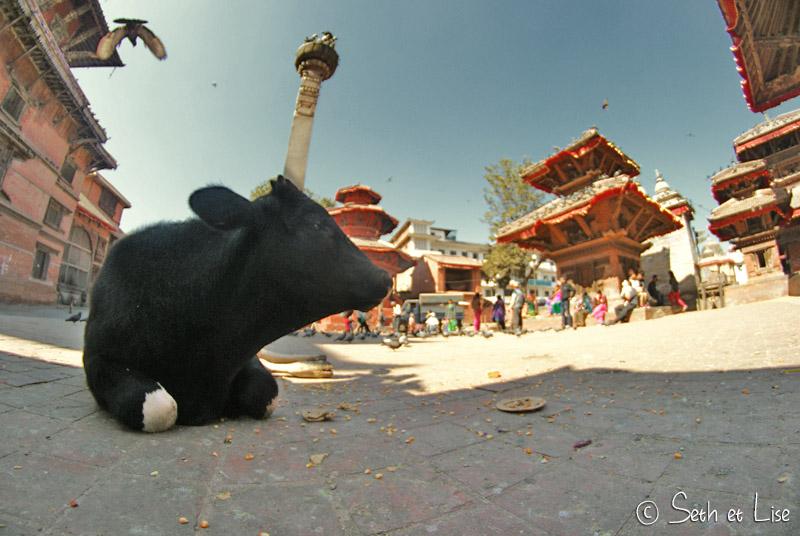 blog voyage nepal tour du monde durbar square katmandou vache