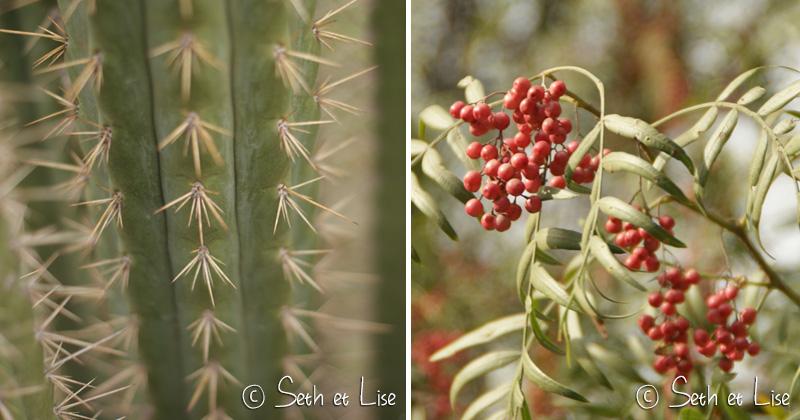 cactus et baie chilienne