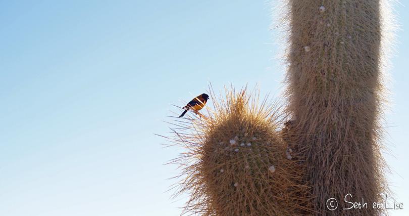 salar uyuni bolivia cactus bird