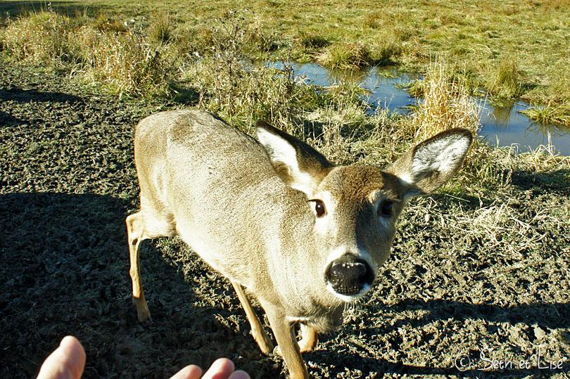 hug deer
