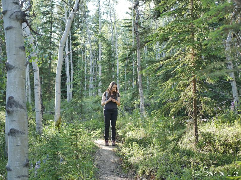 Orchid Trail à Dawson, la promenade aux orchidées