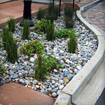 Bioretention (Rain Gardens)