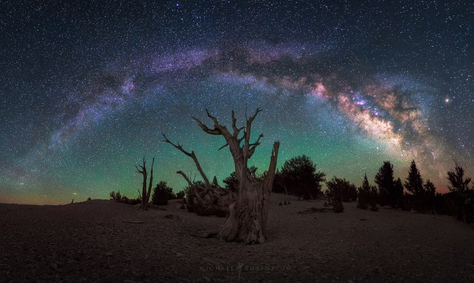 Milky Way Tree California
