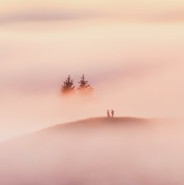 Love Forest Fog Hill Passion