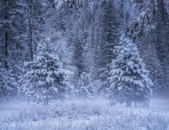 Winter trees yosemite national park