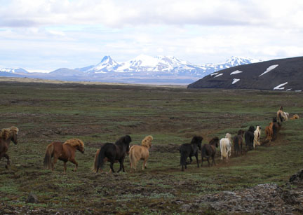 These horses were being herded through the Old Kjölur pass.