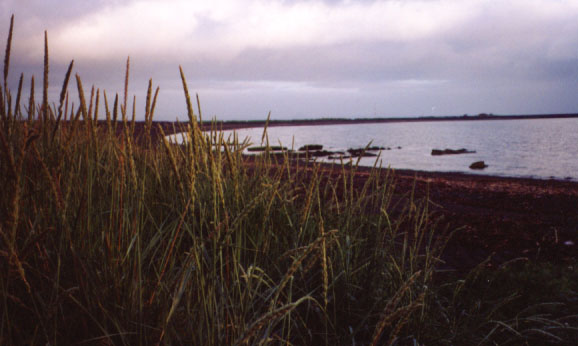 reykbchgrass