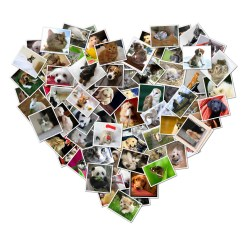 Smart Music Make Heart Shaped Digital Photo Collages Shape Collage Automatic Photo Collage Maker How To Make A 4 Collage On Facebook How To Make A Photo Collage On Facebook