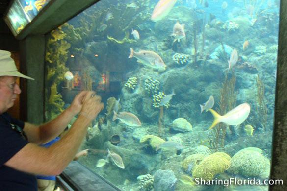 Related to The Florida Aquarium Tampa Aquarium Florida Aquarium