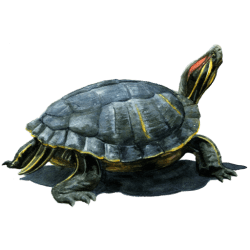cropped-turtle-icon.png