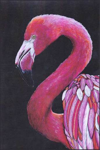Pink Flamingo, colored pencil. Diane McWhirter. Australia.