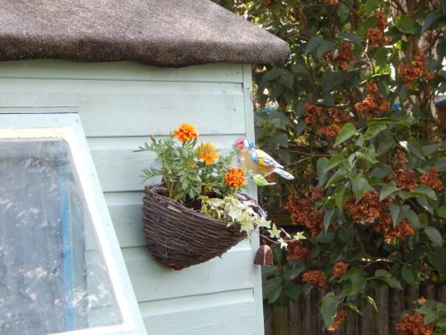 Hanging basket on shed