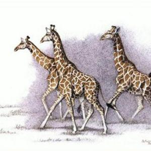 Sherry Steele Artwork - Poetry in Motion | Giraffes