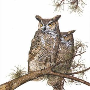 Sherry Steele Artwork - Vision in the Pines | Owls