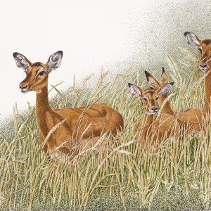 "Sherry Steele Artwork - ""Caution - Impala Crossing"""