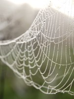 New friendships – delicate, like spiderwebs