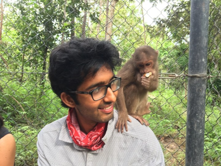 Cheeky monkey business
