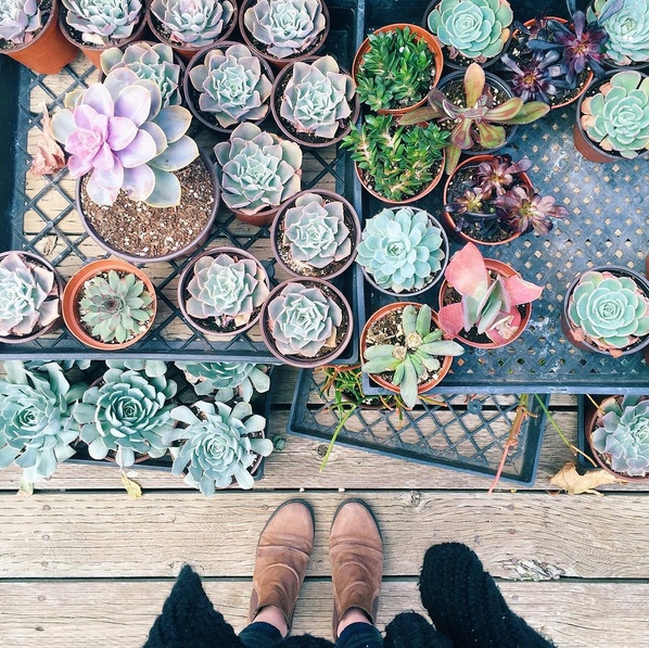 bri emery flat lay photo succulents