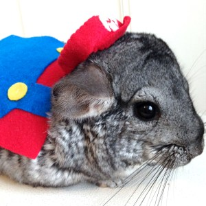 Super Mario Small Pet Costume Shut Up And Take My Yen : Anime & Gaming Merchandise