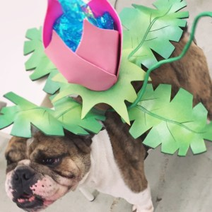 Pokemon Ivysaur Dog Costume