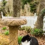 20140405-cat-by-birdbath-2-L
