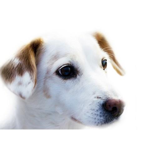 Medium Crop Of Dog Name Generator