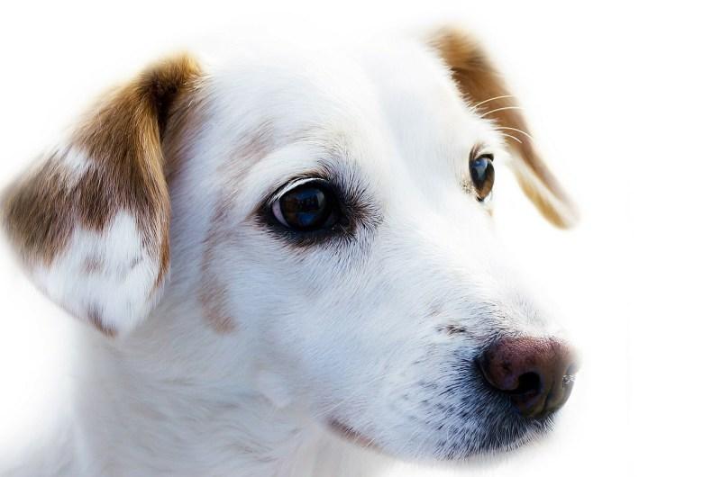 Large Of Dog Name Generator