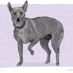Paw Lift – Dog Body Language
