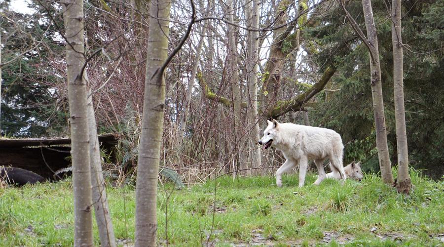 woodland_park_zoo_17