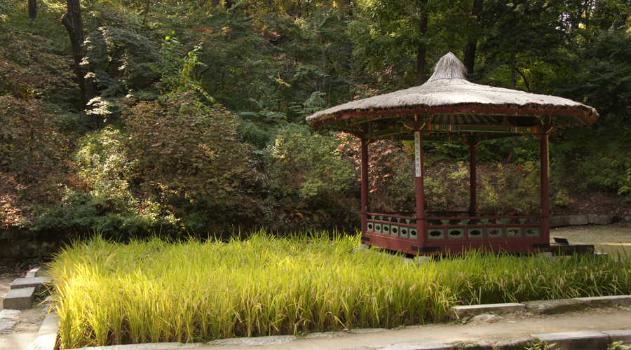 2014-seoul-korea-changdeokgung-palace-secret-garden-biwon-10