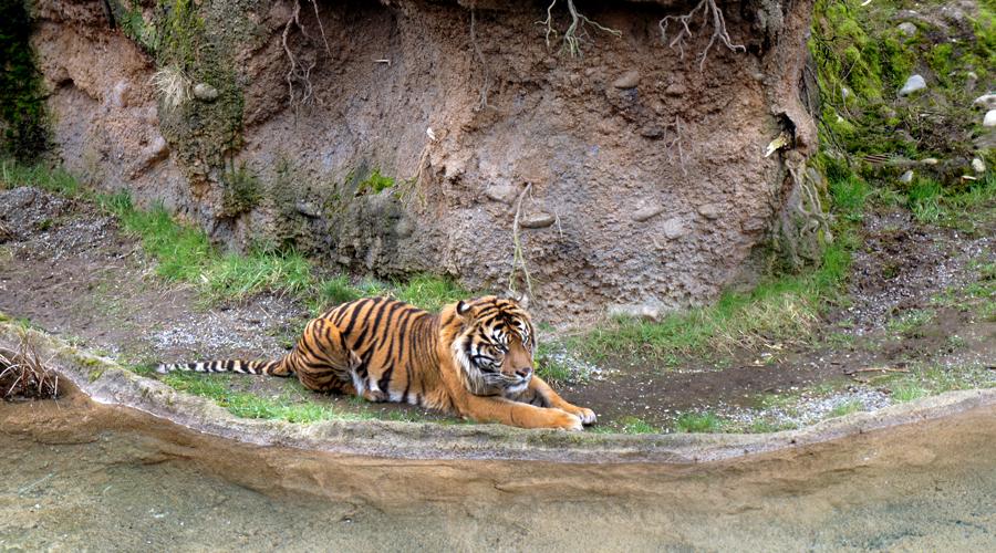 2011-point-defiance-zoo-aquarium-4